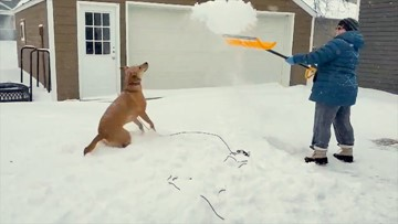 No such thing as too much snow for this dog