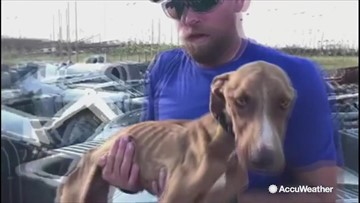 'Miracle' dog found trapped in hurricane rubble meets his forever family