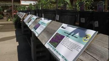 Three gardening tips for beginners