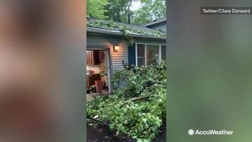 It's like storms are nature's lumberjacks