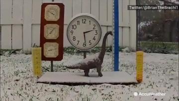 Brian the Brachiosaurus' snow time-lapse