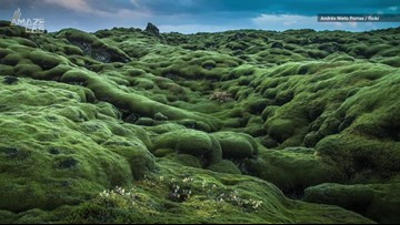 Iceland's Lava Field is a Must-See, Mossy Wonderland with a Dark Past