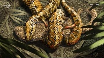 Creepy Snake Ancestor Grasped Prey with Four Tiny Limbs