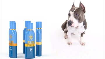 Do You Need to Put Sunscreen on Your Dog?