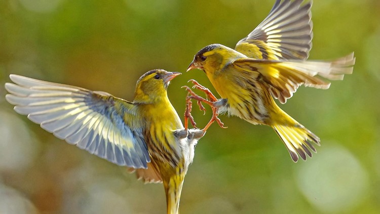 Wildlife Photographer Captures Beautiful Collection of Birds That Flew Into His Garden During Lockdown