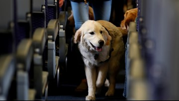 US proposes restricting emotional support animals on flights
