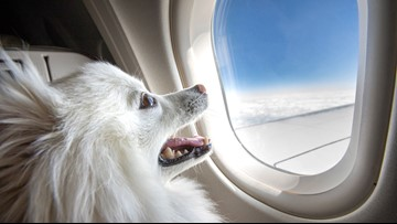 Traveling with emotional support animals vs. service animals: What you need to know