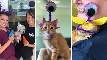 Forget Area 51, you can storm this animal shelter and take their 'aliens'