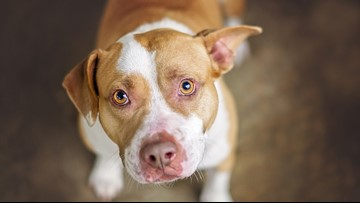 No pit bulls allowed: Delta standing firm with ban despite pushback