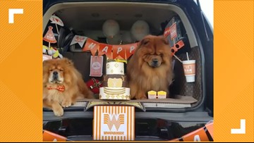 Pup celebrates birthday with Whataburger-themed 'pawty'