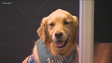 Austin comfort dogs in Odessa to support victims after mass shooting