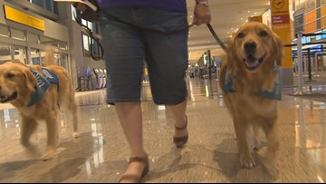 Austin comfort dogs en route to El Paso to offer emotional support after mass shooting