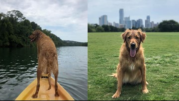 'I love you for all of time': Woman sends warning when dog dies after swimming in Lady Bird Lake