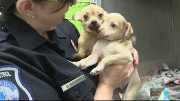 39 dogs seized in home that had no running water or electricity