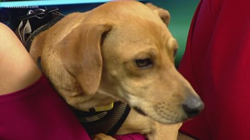 Rocky visits the studio for Pet of the Week