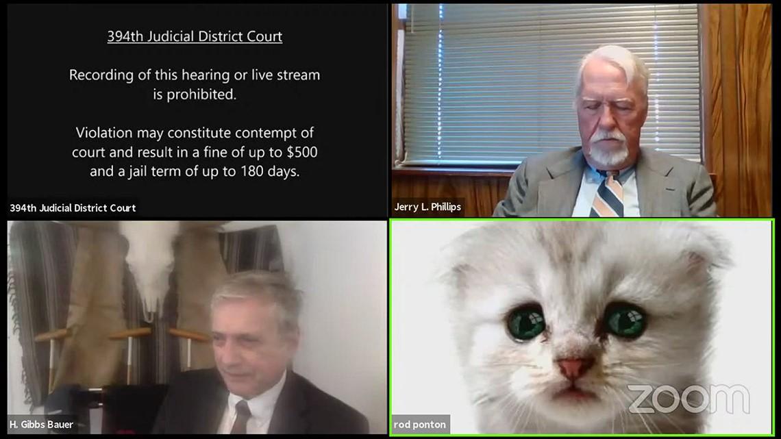 Zoom filter causes judicial hearing to take 'ameowsing' turn