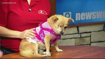 Marge visits the studio for Pet of the Week