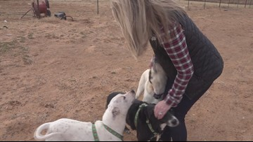 Local woman puts together low budget spay and neuter vet clinic