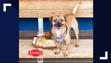 Romeo visits the studio for Pet of the Week
