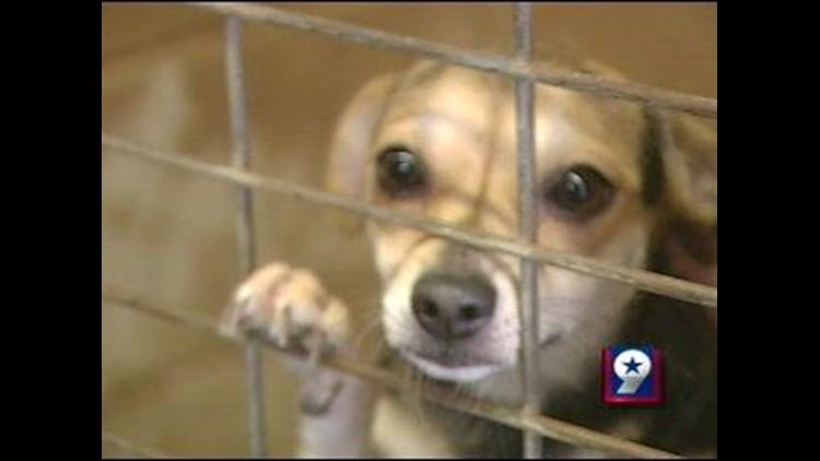 Parvovirus Attacks West Texas Puppies