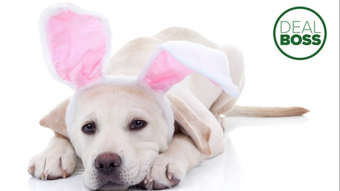 PetSmart is offering free Easter bunny photos this weekend