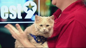 Cream Puff visits the studio for Pet of the Week