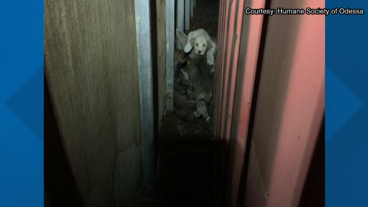 Humane Society of Odessa sees rise in illegal dumping of dogs