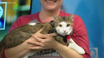 Caspurr visits the studio for Pet of the Week