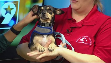 Carlos visits the studio for Pet of the Week