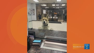 Viral dog meets with Odessa Police Department