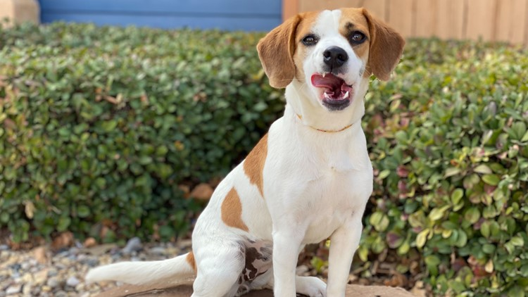 Meet Biscuit, Newswest 9's Pet of the Week