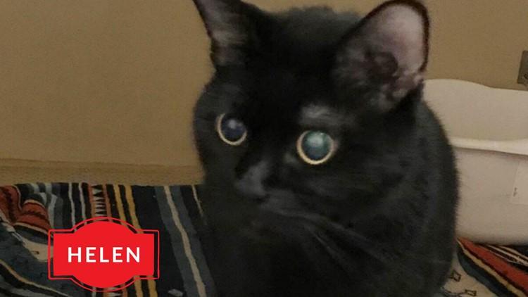 Meet Helen, NewsWest 9's Pet of the Week