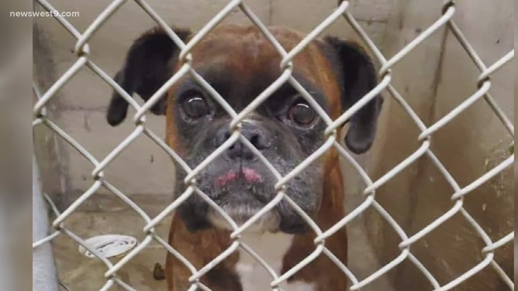 Delek Fund for Hope paying for 100% of adoption fees at Big Spring humane society