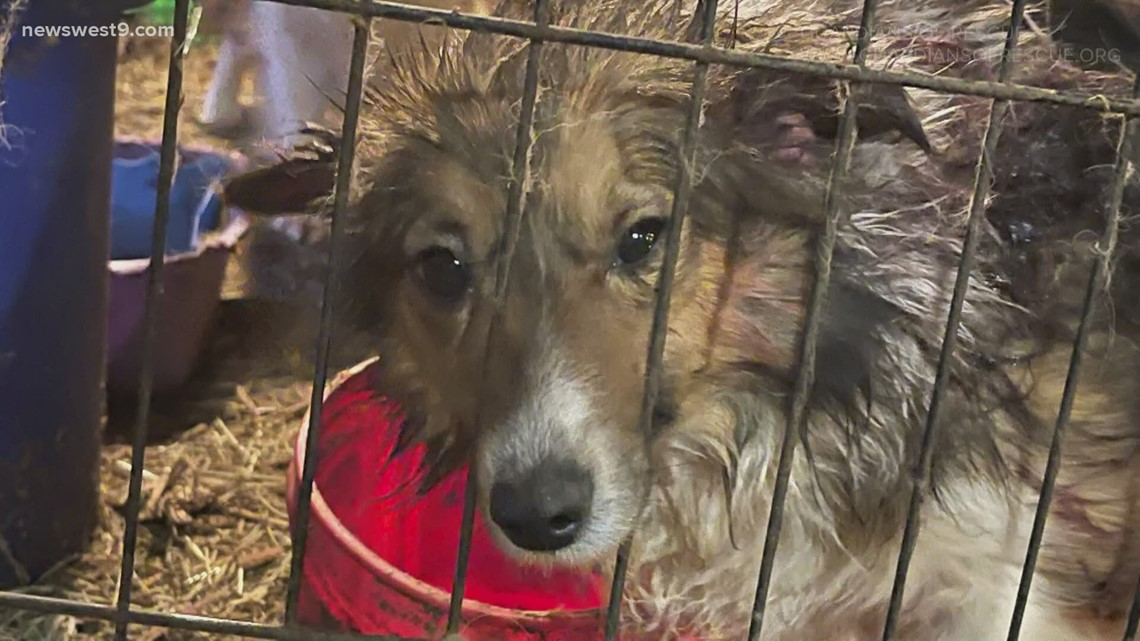 Texas House passes bill targeting puppy mills