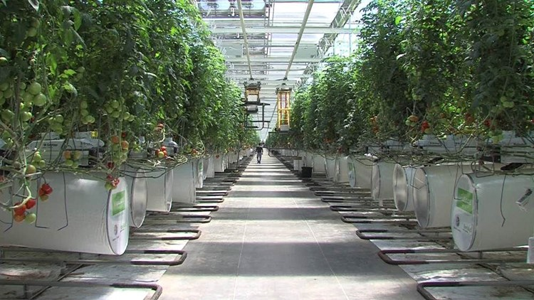 Employee Void Crippling Monahans Greenhouse