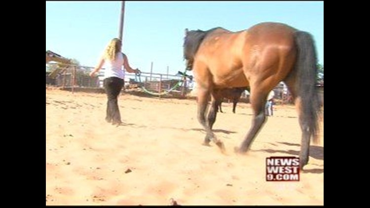 New Nonprofit Working to Curb Horse Mistreatment