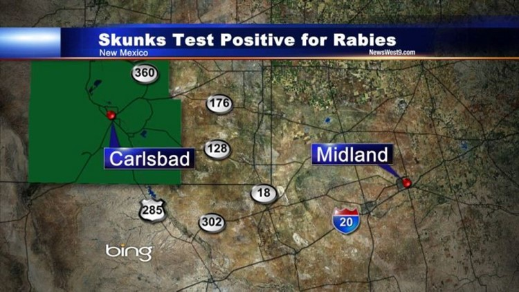 Carlsbad, Eddy County Warned of Rabid Skunks