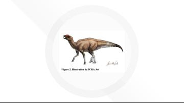 Fossils identified as new dinosaur species