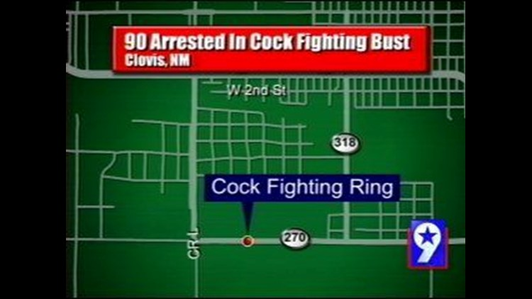 New Mexico Police Bust Cockfighting Ring, Over 90 Arrests Made