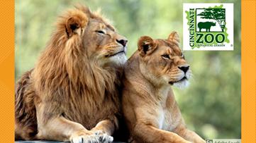 Cincinnati Zoo and Botanical Garden brings virtual Safari