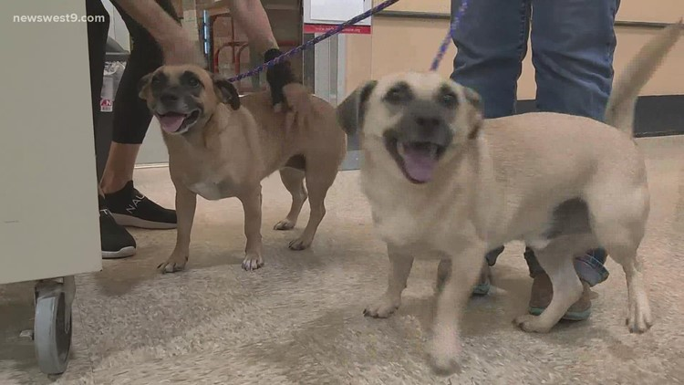 Meet Ben and Briar, NewsWest 9's Pets of the Week