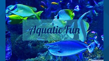 Georgia Aquarium live views creates fun for everyone