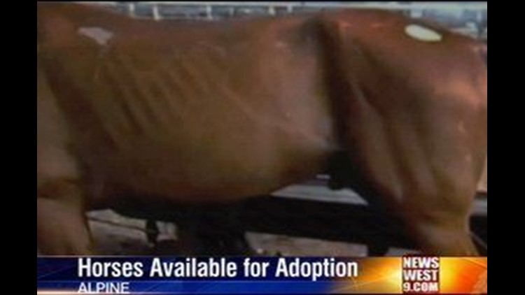 Seized Horses Still Available for Adoption in Alpine