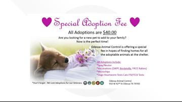 Odessa animal shelter offering adoption special