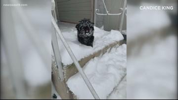 West Texas snow pets