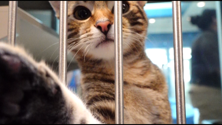 Midland Animal Shelter opens new space