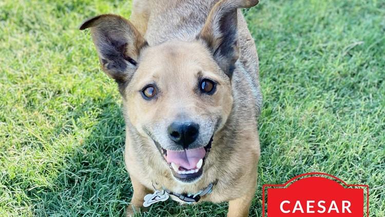 Meet Caesar, NewsWest 9's Pet of the Week