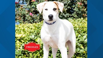 Freckles visits the studio for Pet of the Week