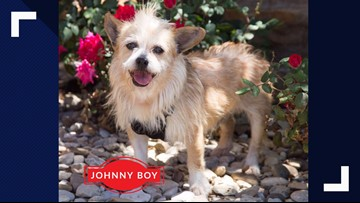 Johnny Boy visits the studio for Pet of the Week