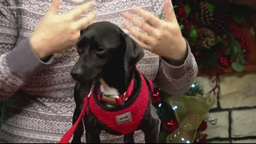 Eric visits the studio for Pet of the Week